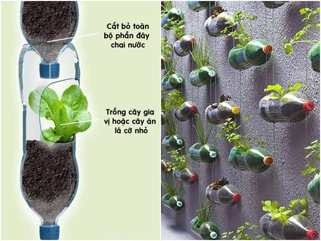 Sử dụng chai nhựa để nuôi dưỡng cây trồng