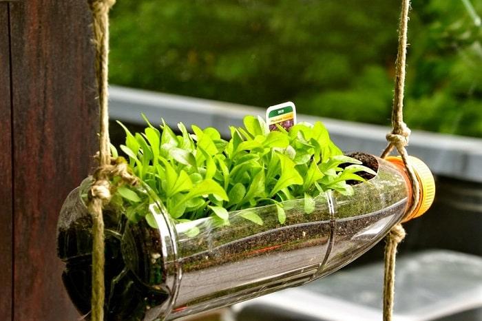 Tái chế chai nhựa để trồng rau