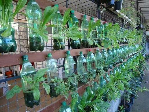 Trồng rau từ chai nhựa