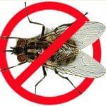 6 Cách đuổi ruồi hiệu quả