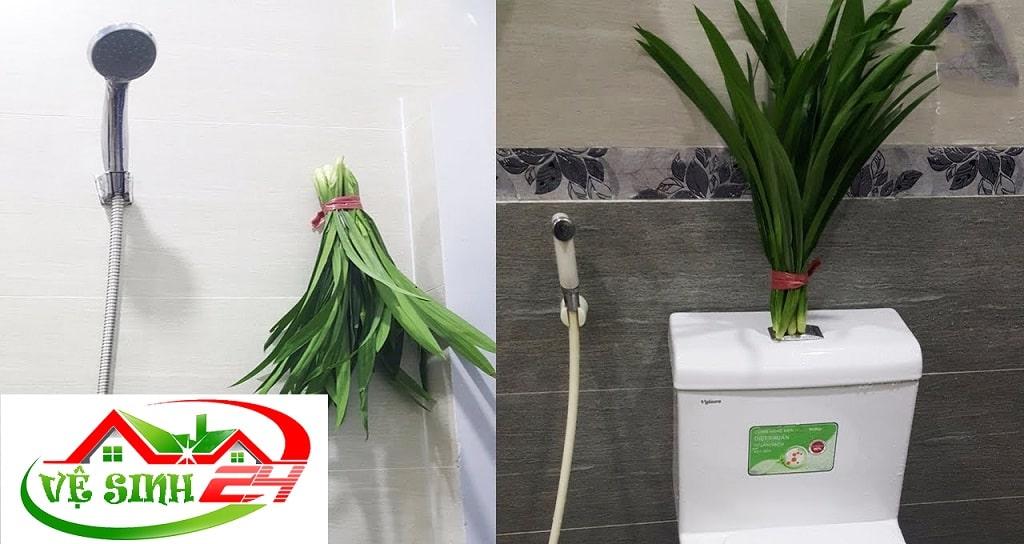 Cách khử mùi nhà vệ sinh bằng lá dứa